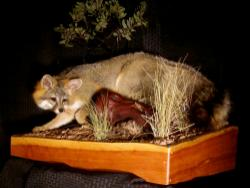 Wild Heritage Taxidermy Picture